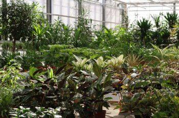vendita piante da interno bergamo - vivaio locatelli bergamo 4