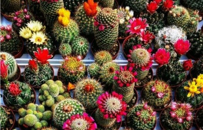 vendita-piante-grasse-bergamo-vivaio-locatelli-3