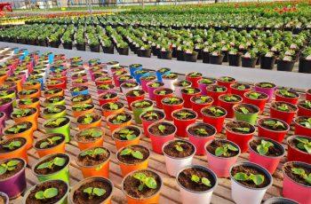 vivaio-a-bergamo-coltivazioni-vivaio-locatelli-5