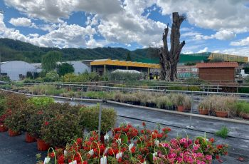 vivaio vendita piante a bergamo - vivaio locatelli 2